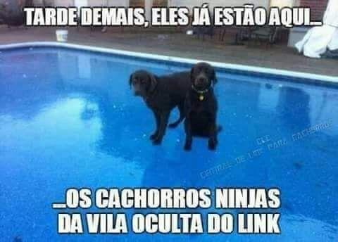 Cachorros Ninjas